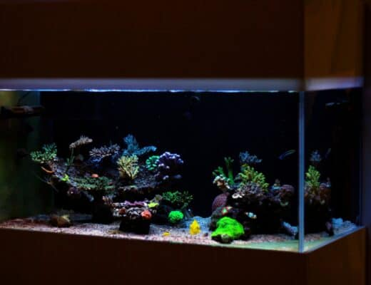 75 gallon aquarium with corals