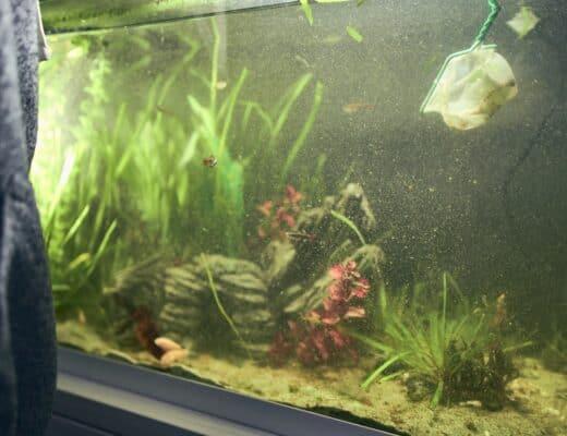 polluted aquarium