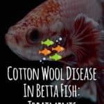 Cotton Wool Disease