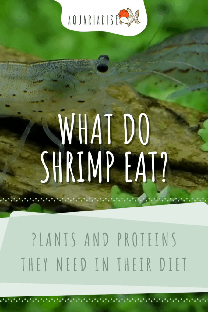 What Do Shrimp Eat