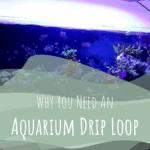 Aquarium Drip Loop