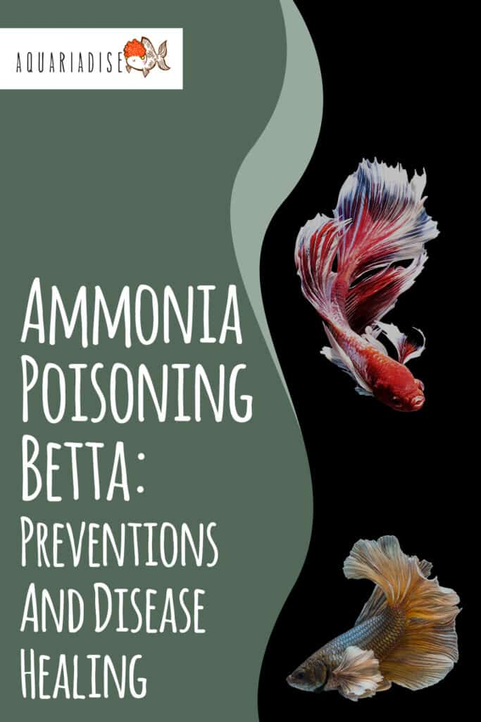 How to lower ammonia levels