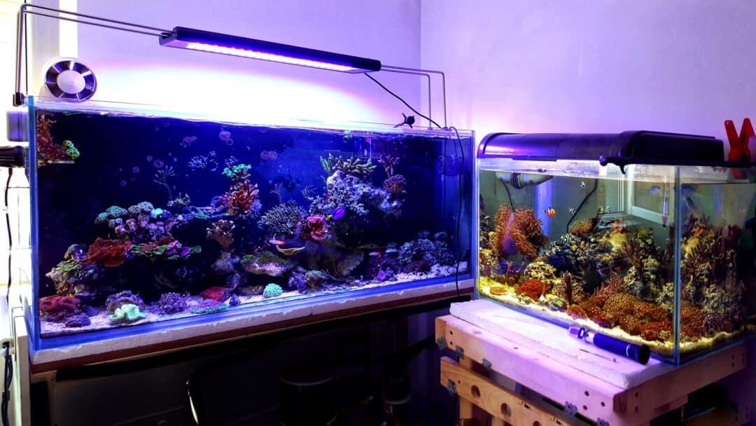aquariums with equipments