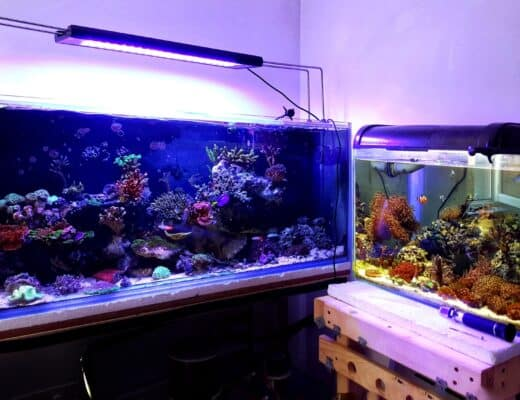 aquariums with equipments