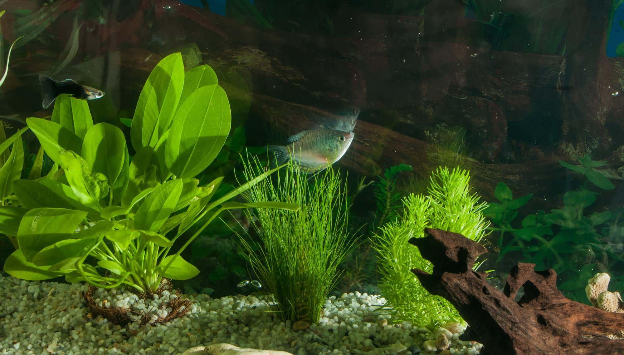 freshwater aquarium with fish