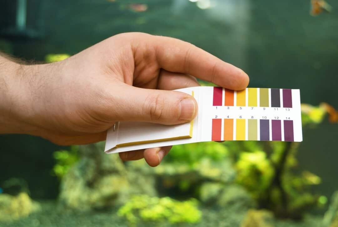 Aquarium Water Hardness