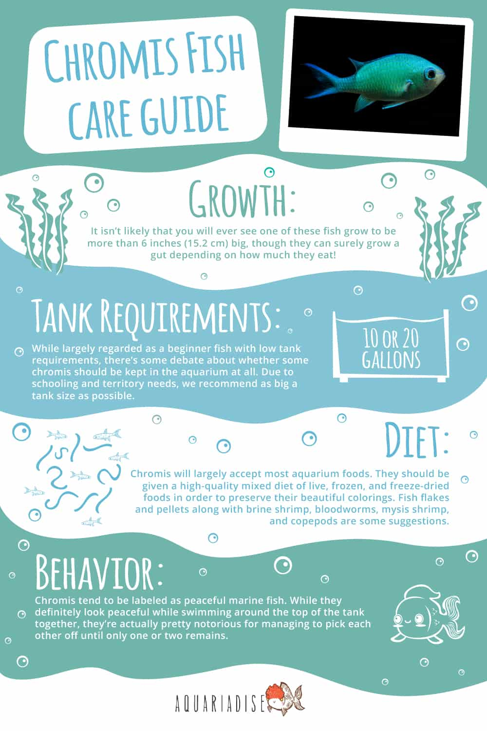Chromis Fish Infographic