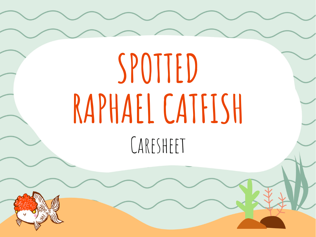 Spotted Catfish