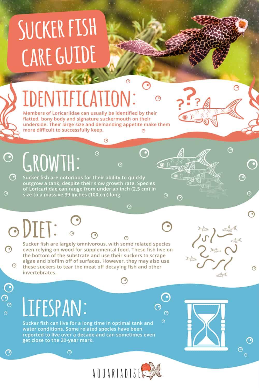 Sucker Fish Care Guide Sheet