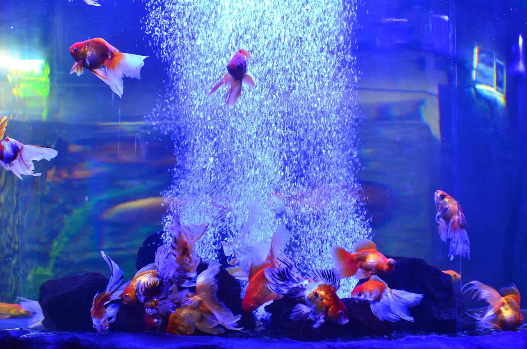 aquarium bubbles and fish
