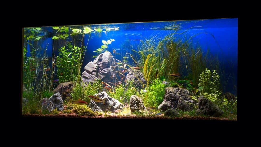aquarium lighting timers
