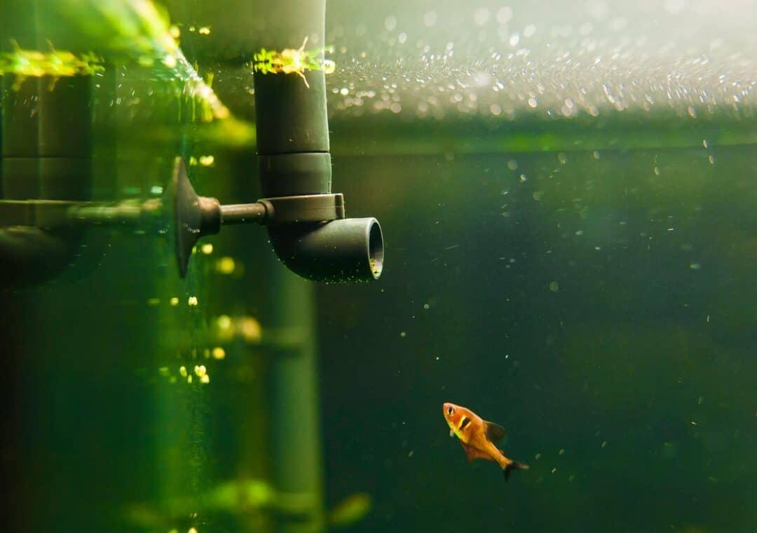 aquarium water changer