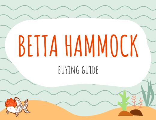 Betta Hammock