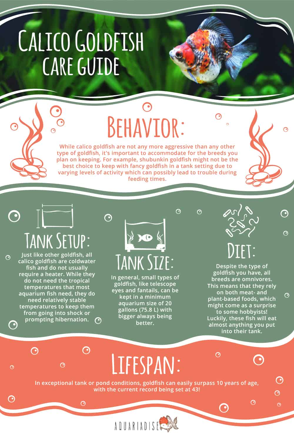 Calico Goldfish Care Guide Infographic