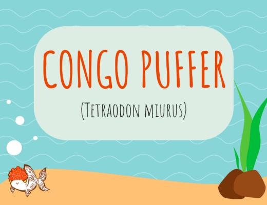 Congo Puffer