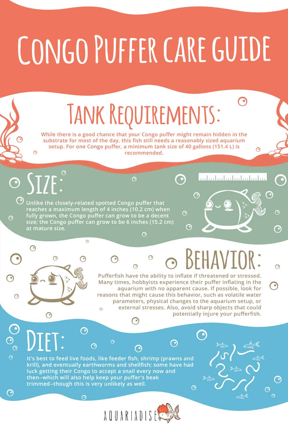 Congo Puffer Care Guide Infographic