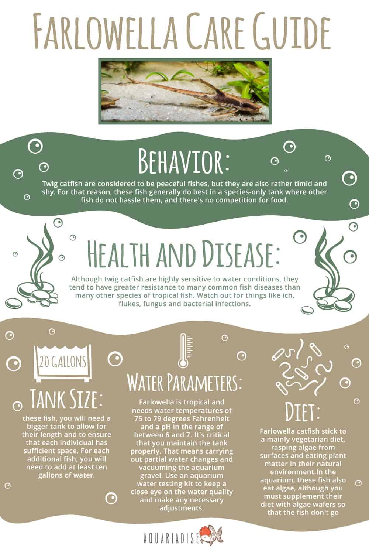 Farlowella Care Guide Infographic