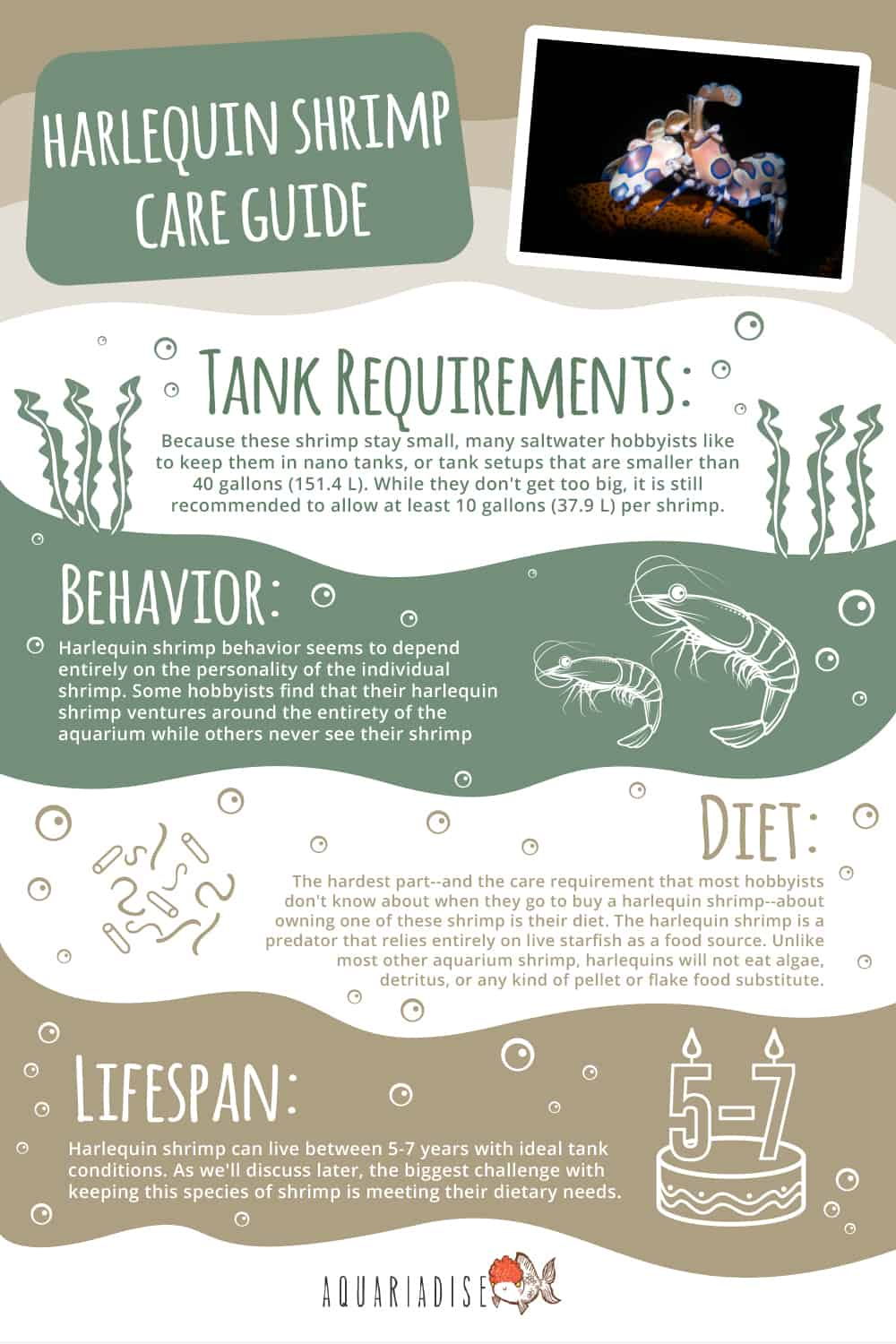 Harlequin Shrimp Care Guide Infographic