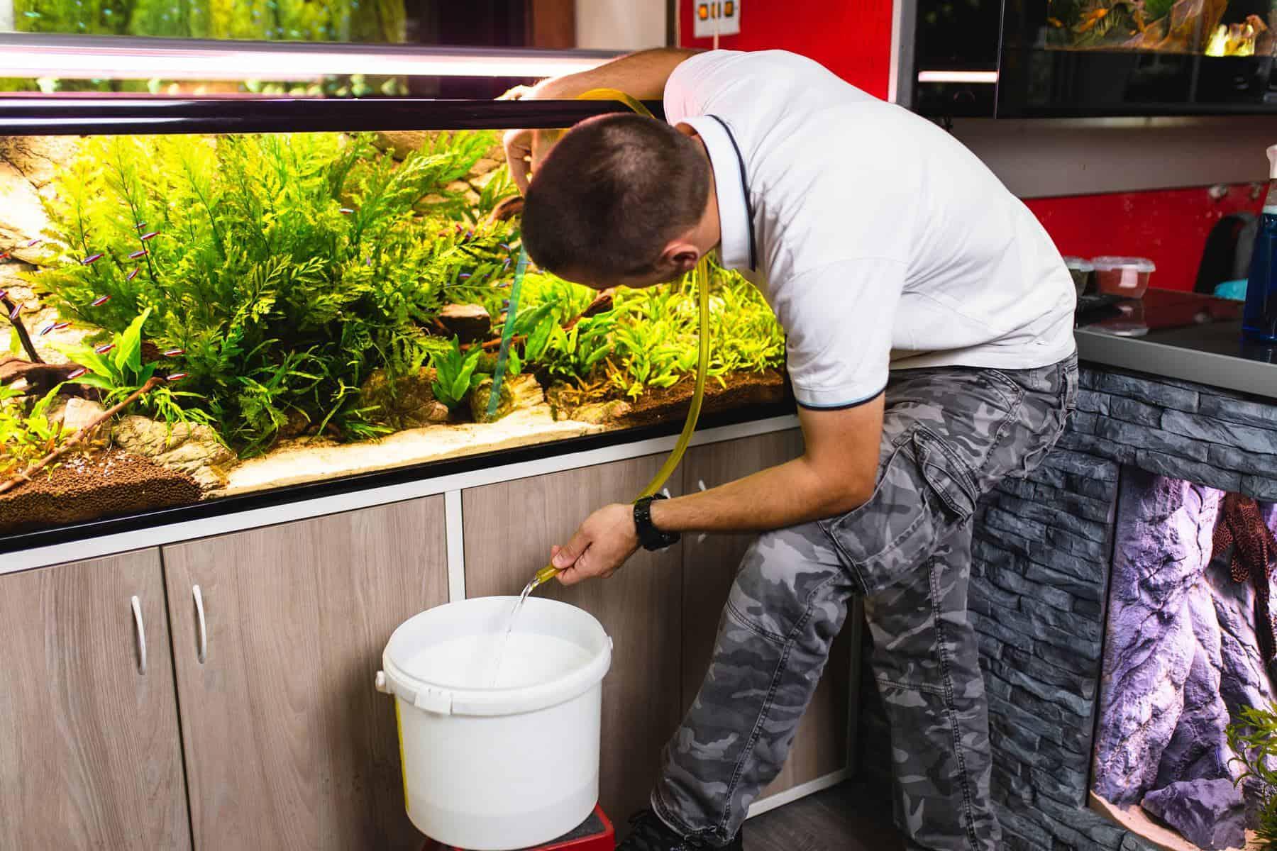 man changing water in aquarium