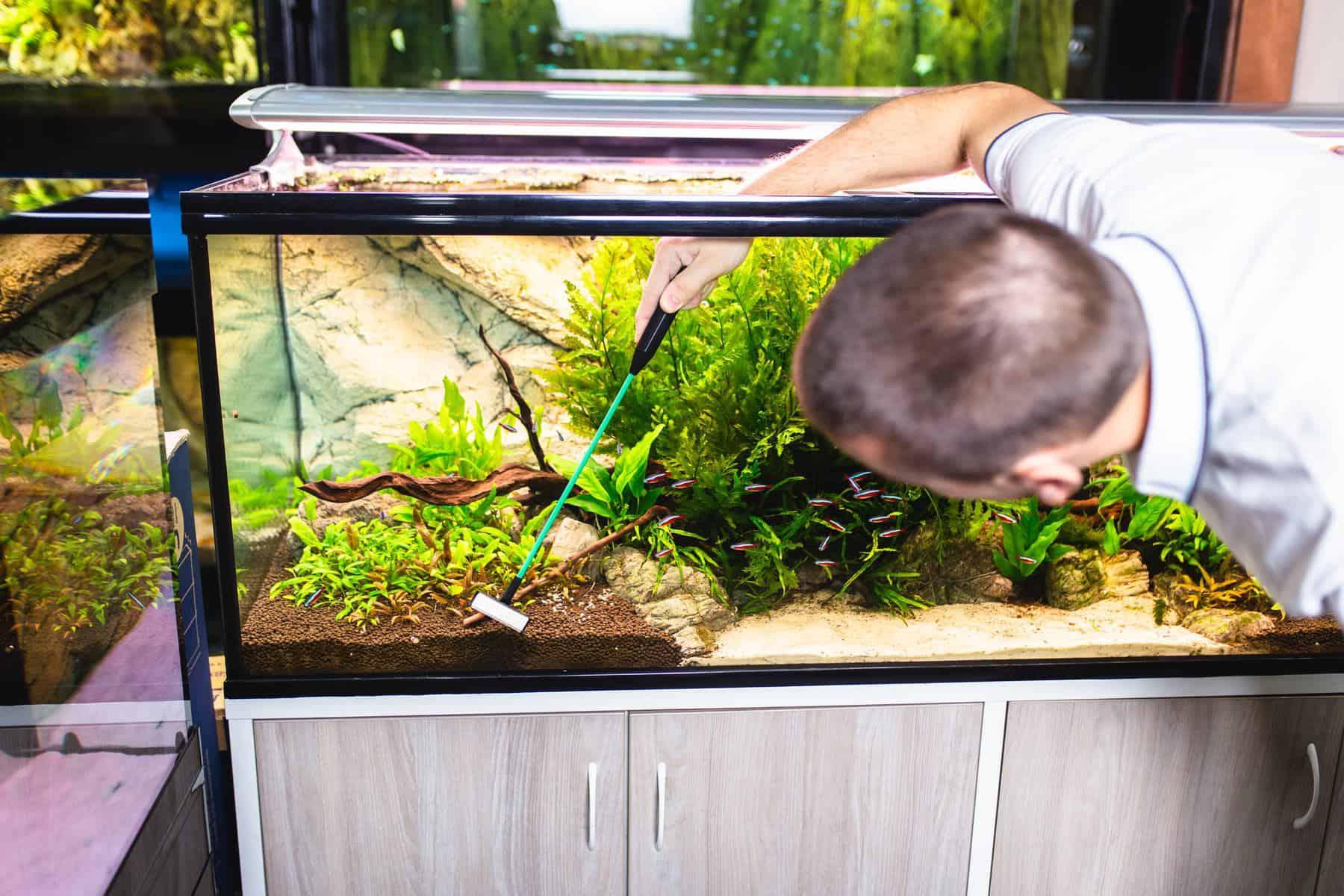 man cleaning aquarium