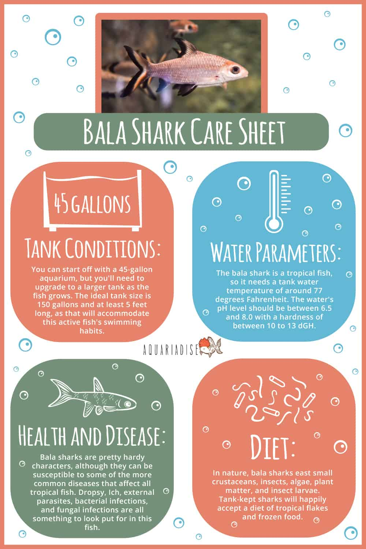 Bala Shark Care Sheet Infographic