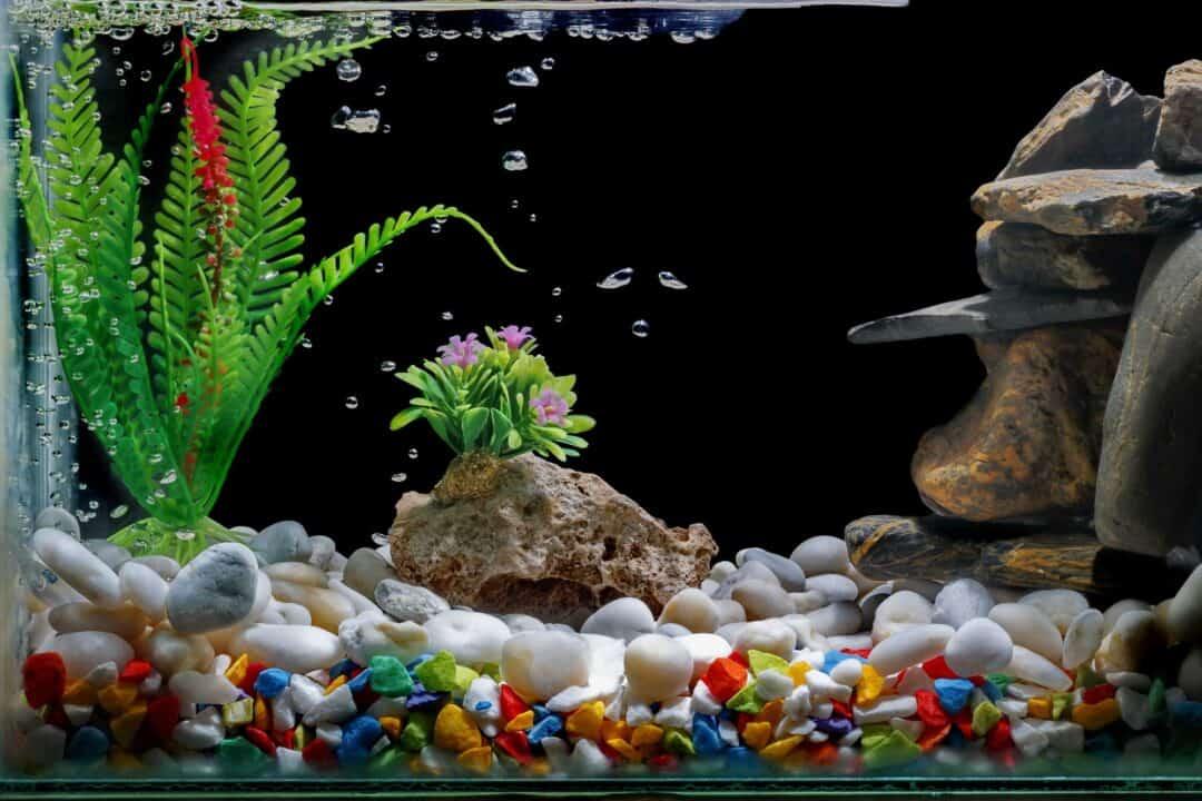 Best Aquarium Decorations