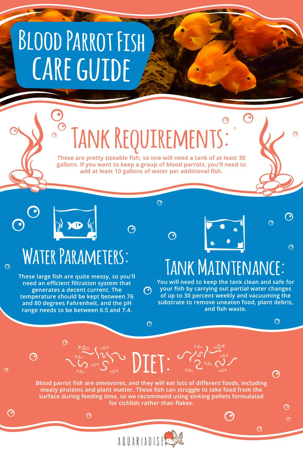 Blood Parrot Fish Care Guide Infographic