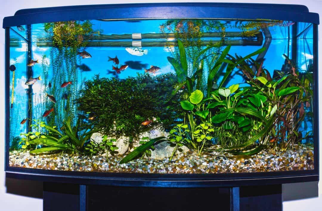 Corner Aquarium