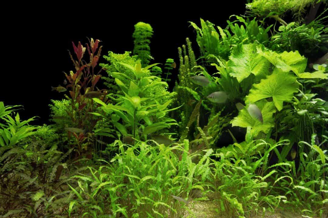 best aquarium plant fertilizer