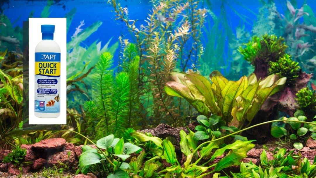 Best Aquarium Bacteria Supplement