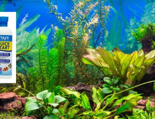 Best Aquarium Bacteria Supplement