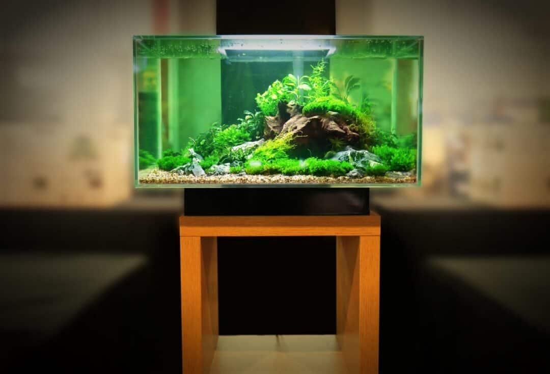 Best Aquarium Stands
