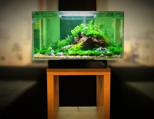 Best Aquarium Stands