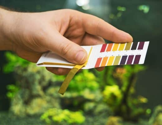 Best Aquarium Test Strips