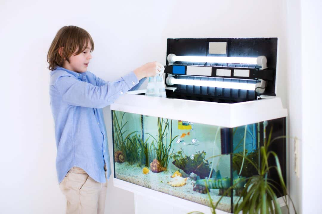 Best UV Sterilizer Freshwater Aquarium