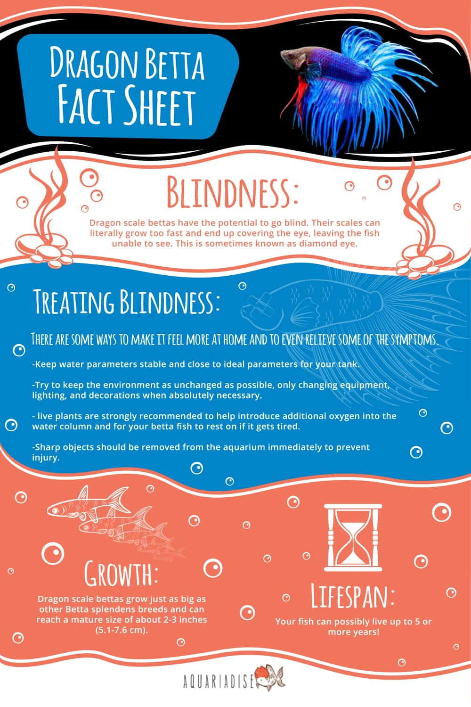 Dragon Betta Infographic