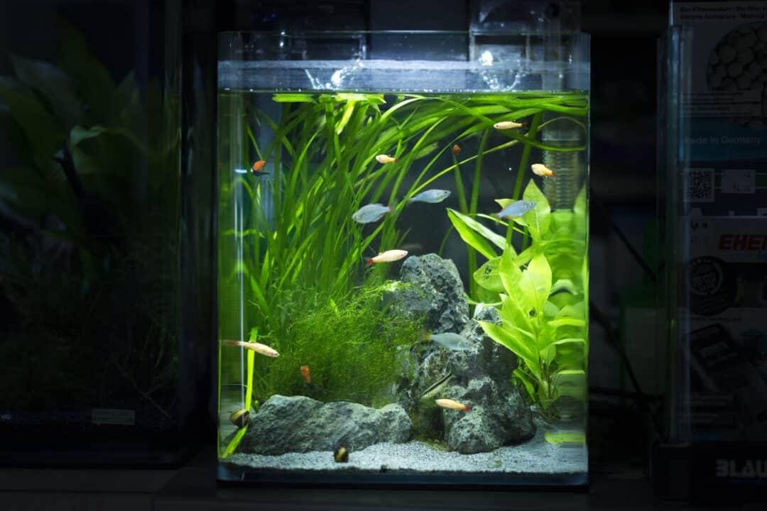Best Nano Aquarium