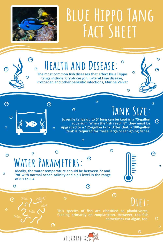 Blue Hippo Tank Infographic