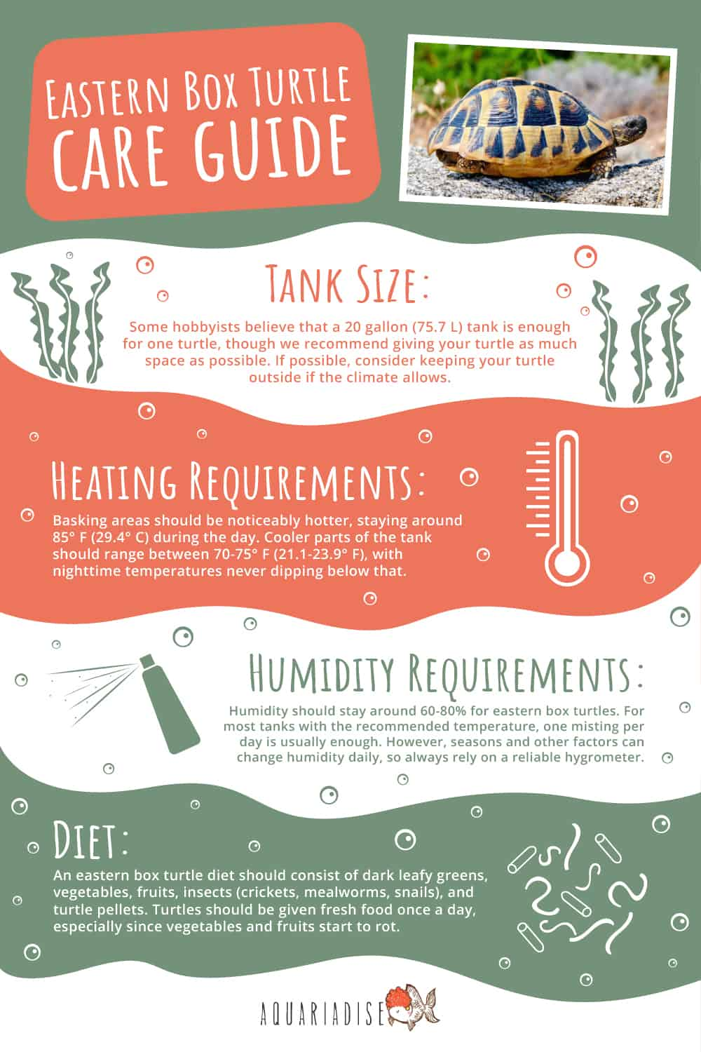 Eastern Box Turtle Infographic