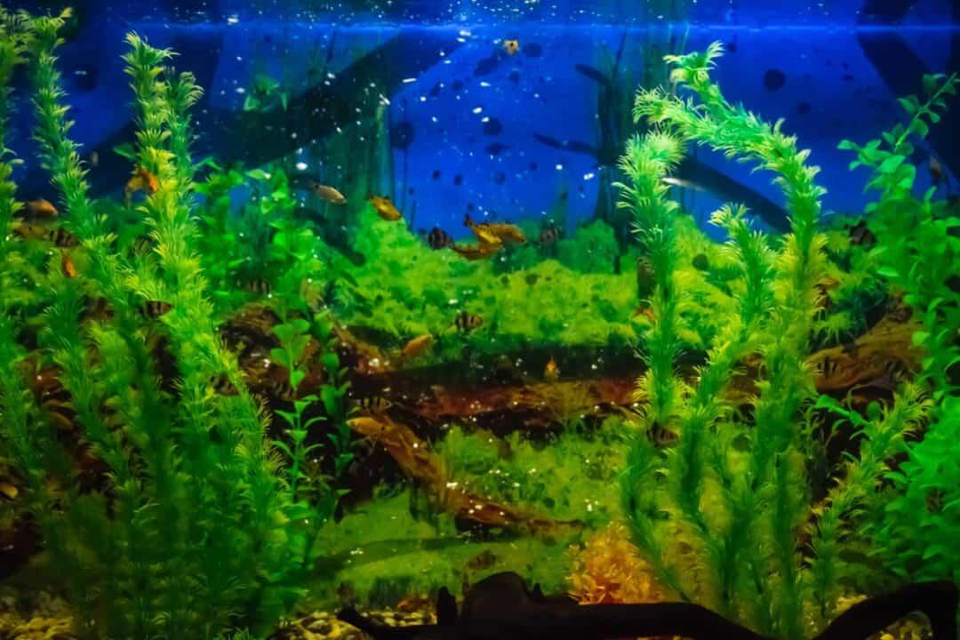 How To Raise pH In Aquarium