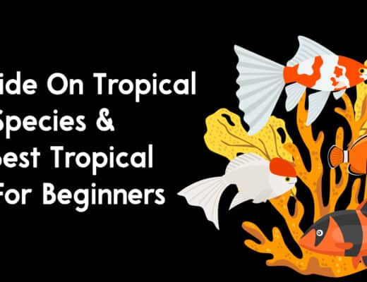 A Guide On Tropical Fish Species & The Best Tropical Fish For Beginners