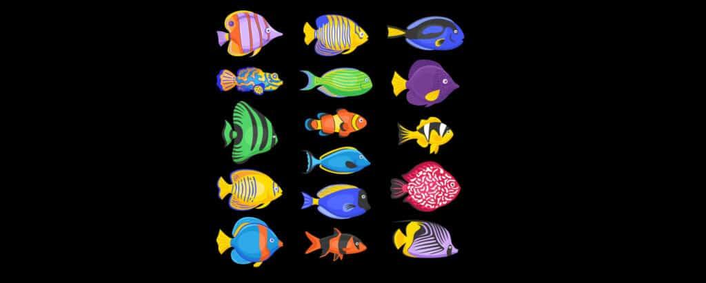Saltwater Tropical Fish Species